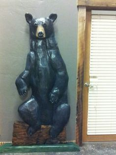 douglas fir/ black bear