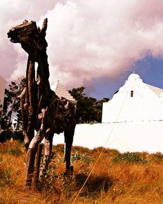 Alys Beach wild horse #30A #SoWal