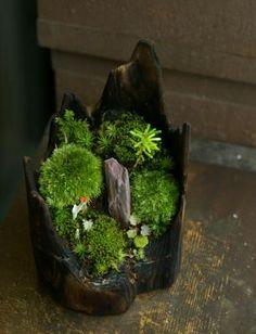 garden in tree stump