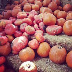 fall pumpkins | @designconundrum