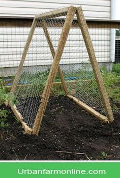 Garden trellis - increase growing space and protect sun-sensitive plants