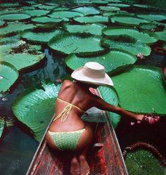 brazil, lotus, emerald, color, green, leav, bikini, boat, water lilies