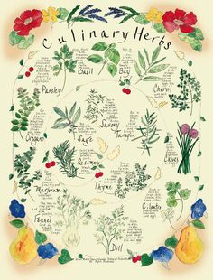 Culinary herbs #herbs #pinterest #joannamagrath #garden
