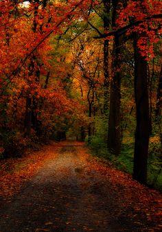Autumn in Fairmount Park, Philadelphia, Pennsylvania