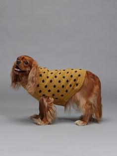 polka dot dog sweater. love love..  #dog #accessories