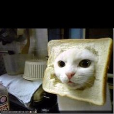 "In""bread"" cat..."