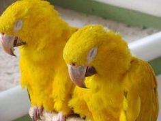 Beautiful Sleeping yellow birds