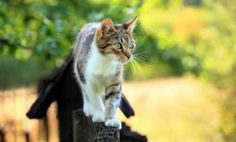 Top 5 Reasons 'Moggies' (Cat Mutts) Are Awesome