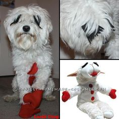 My Little Lamb Chop Dog in Costume... Coolest Halloween Costume Contest