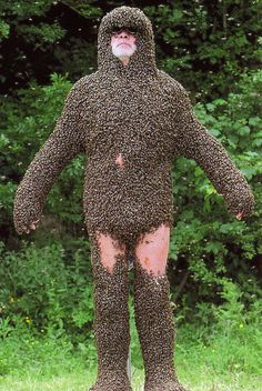 Taking the beard of bees a little too far