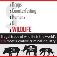 """Watch the first episode of WWF's """"Stop Wildlife Crime: The Series"""" http://wwf.to/14jwGo0"""