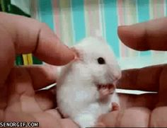 A surprised hamster: | 21 Things You've Never Seen Before In Your Life