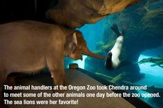 OH MY GOODNESS - more of a reason to love elephants! SOOOO CUTE!