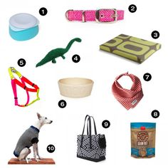 Stylish Dog Accessories from Petswag - Dog Milk