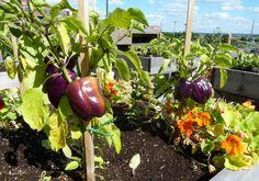 Yardless Garden Tips