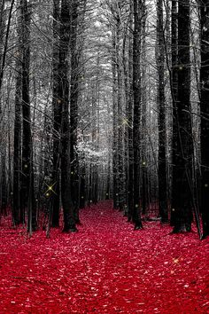 forests, fireflies, red riding hood, little red, color