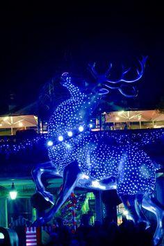 Reindeer in #lights