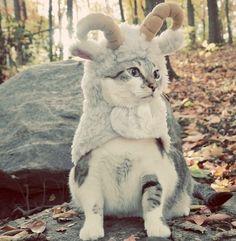 Halloween Pet Costum