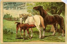 Singer Sewing Machine Trade Card + Horses