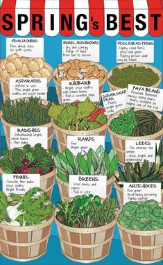 Spring Produce: Your Guide to Picking the Best | Greatist