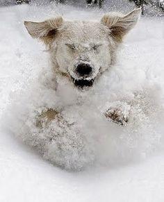I'm a snow plow!