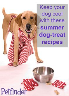 Yummy, cooling treat-recipes for your dog!