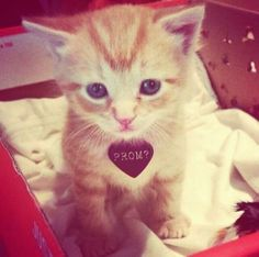Cat lovers!! The cutest way to ask! #promposal #prom