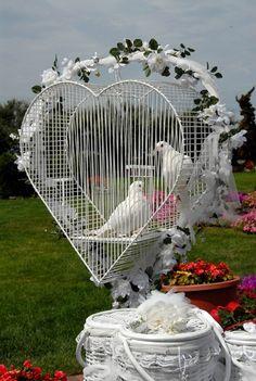 Pombas do amor <3