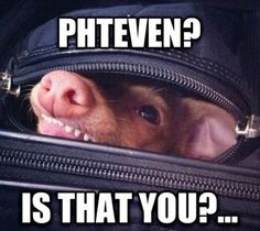 PHTEVEN ?get back in there creepy dog!