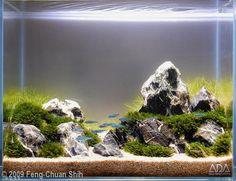 2009 AGA Aquascaping Contest - Entry #167
