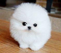 Fluffy...!!! <3