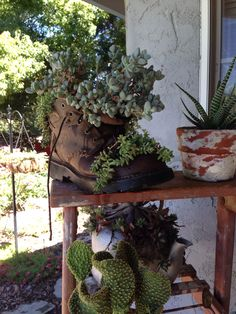 Succulents in a boot