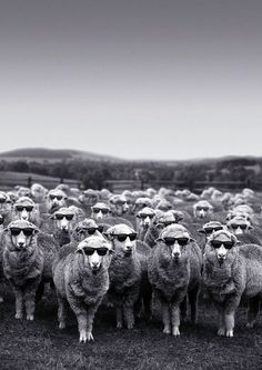 Too cool for wool.