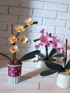 how to: orchids