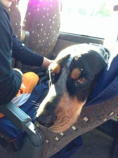 Smokey on the bus to Tuscaloosa!