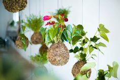 urban garden, hang garden, hanging gardens