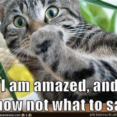 Shakespeare Memes! on Pinterest | News  Animal Shakespeare Memes