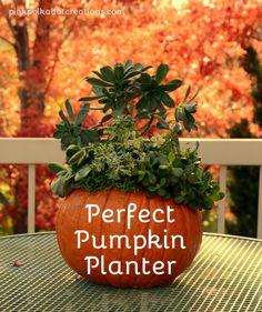 Perfect Pumpkin Plan
