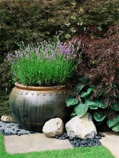 Lavender Container - Using Large Garden Containers on HGTV