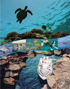 Kona Reef, Big Island, Hawaii