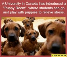"What a fantastic idea! A ""puppy room"" to relieve stress!  #helendoronenglish #ESL #EFL #bilingualism"