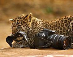 Many Means: Amazing WildLife Photography