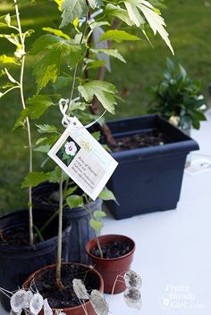 Plant swap! What an awesome idea!