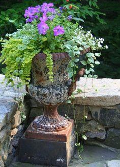 flower urn, outdoor urn, outdoor planter, petunia, urn planters, creep jenni, planter urn ideas, garden, urn planter ideas