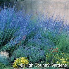 These tall perennials can add color and drama to the south-facing side of the house, framing a seating area that would act like a front porch.  I love them with lavender