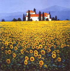 Sunflowers. This is on my bucket list because I've always wanted to run through a field of sunflowers.....