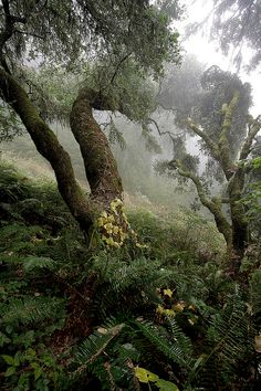 batesnursery: Point Reyes Fog and Forest  by Michael Renfrow