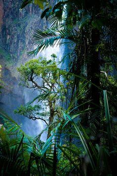 Experience rainforest rain.