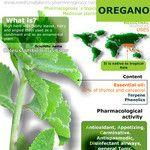 Oregano benefits infographic
