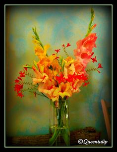 Home-grown Gladioli flower photography with Crocosmia Lucifer flower